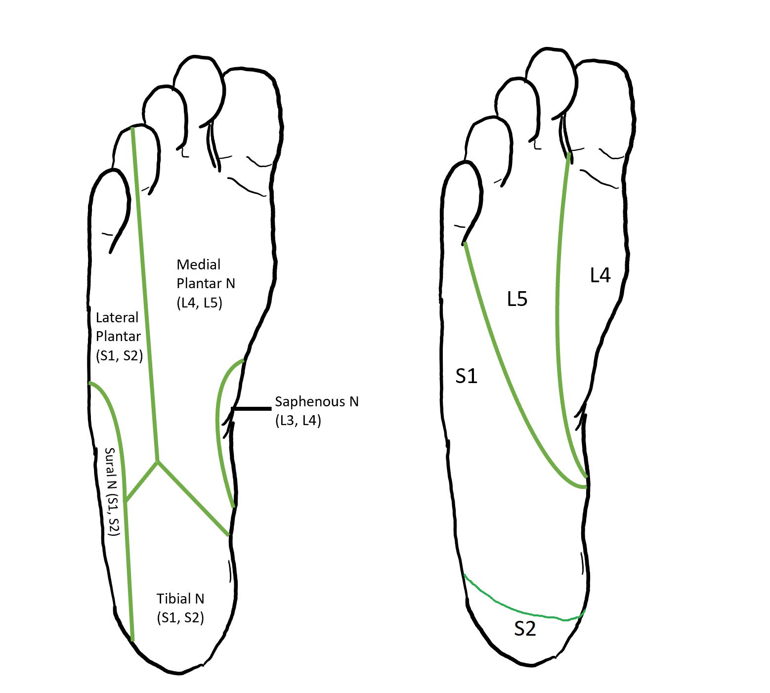 Dermatomes bottom of foot